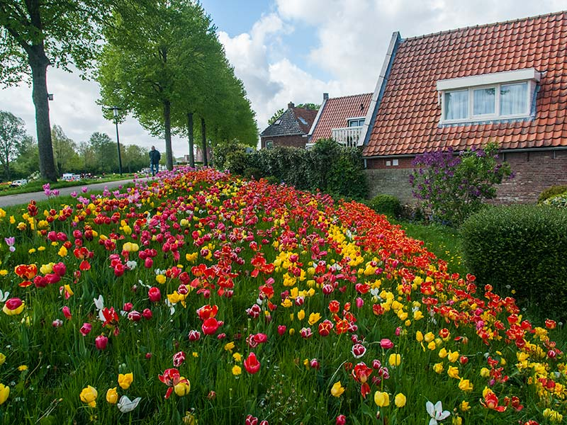 www.tulpenroutefriesland.nl