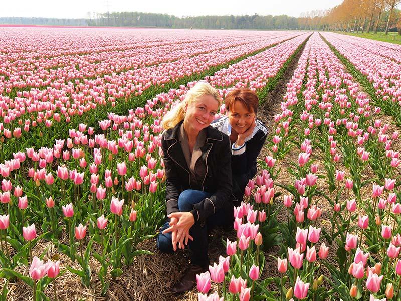 Tulpenroute (noordelijke helft Noordoostpolder) en tulpenshowtuin (Wrakkenpad 2, Creil, Noordoostpolder). Info: http://www.stepnop.nl/tulpenfestival en http://www.kleurrijkflevoland.nl/page4.php