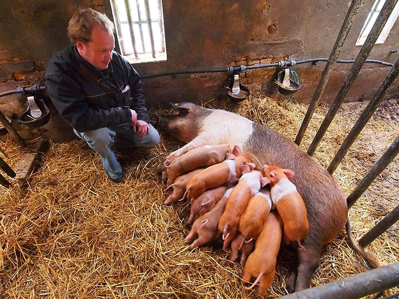 koeien knuffelen noord holland