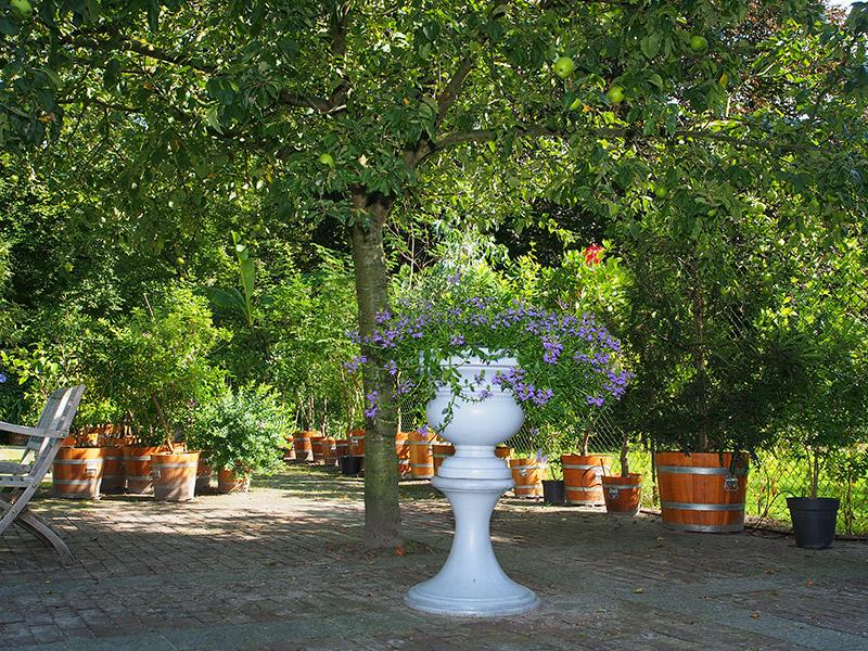 Er is een uitgebreide verzameling kuipplanten, waaronder een aantal fraaie citrusbomen van 100 jaar oud. Deze planten overwinteren nu in een oranjerie die in 1984 is gebouwd. Fotografie: Friesland Holland News.