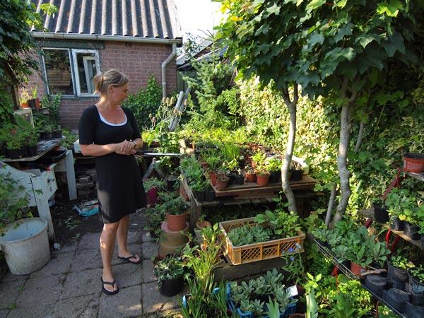 Geen vierkante millimeter onbenut achter de woning van de families Van der Wal en De Boer: overal pottten met stekken.