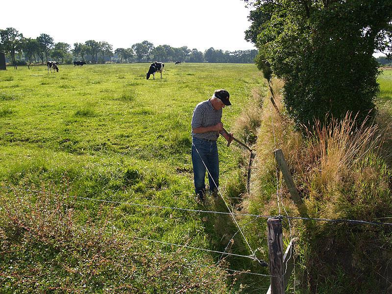 Typisch voor Noordoost Friesland: door boomwallen omzoomde langgerekte weiden.