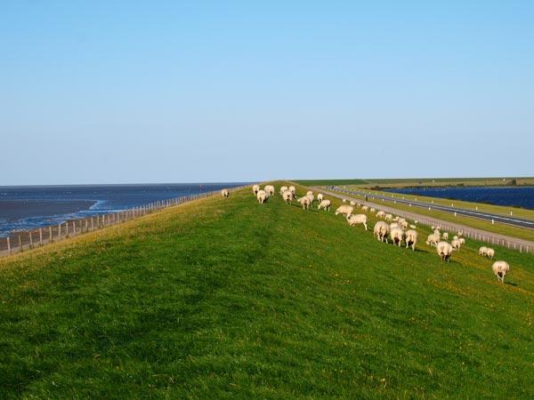 Ook een afsluitdijk, maar niet dé Afsluitdijk. Deze dam kwam in 1969 gereed en scheidde voorgoed de Lauwerszee (rechts) van de Waddenzee (links).