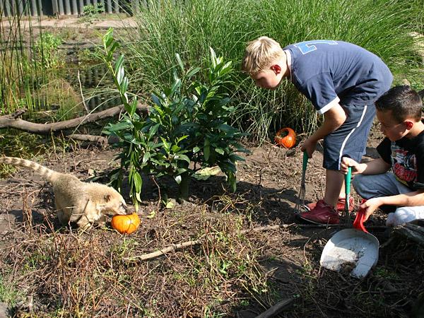 Altijd al een keer exotische dieren zoals stokstaartjes, tapirs en ringstaartmaki's willen verzorgen? Grijp dan nu je kans, tijdens de activiteit KidsPower in Aqua Zoo Friesland.