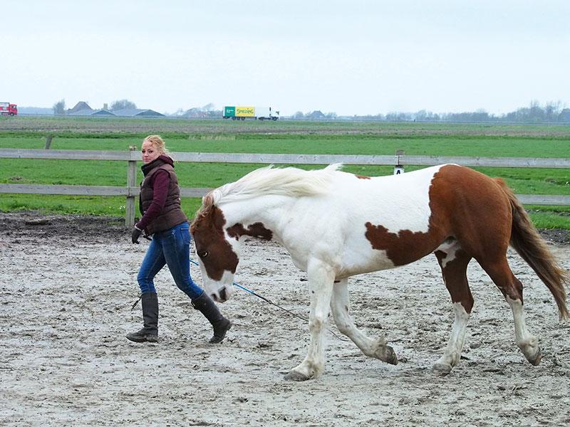 """Horse catching, maar dan omgekeerd: cowboypaard Joy """"vangt"""" Femke in plaats van dat Femke Joy benadert."""
