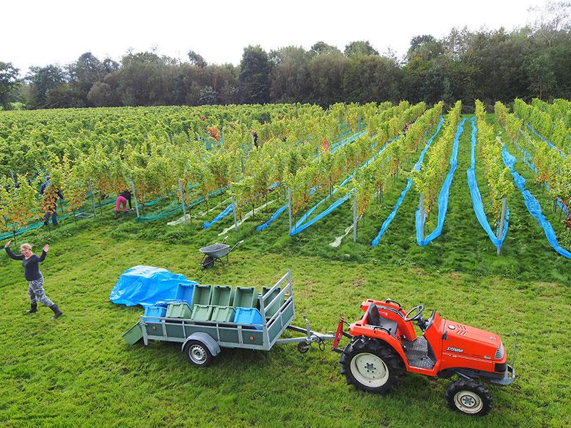 De Frysling is de meest noordelijke wijngaard van Nederland, op de 53ste breedtegraad, in de buurt van de Waddenzee en in de beschutting van boomwallen. Op 1,5 hectare staan sinds 2009 4700 stokken van zes druivenrassen: Johanniter, Solaris, Souvignier Gris, Pinotin, Carbernet Cortis en Cabernet Noir. Dit zijn relatief nieuw ontwikkelde rassen die goed tegen het Nederlandse klimaat kunnen en een hoge mate van resistentie hebben tegen valse meeldauw en andere ziektes. Door geschikte onderstammen voelen deze rassen zich zeer thuis op de zandgrond van de Friese Wouden.