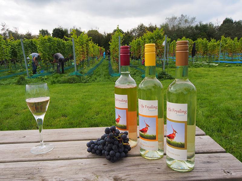 De naam 'Frysling' is een combinatie van de provincienaam Fryslân en het druivenras Riesling, in Duitsland de koningin onder de druivenrassen.
