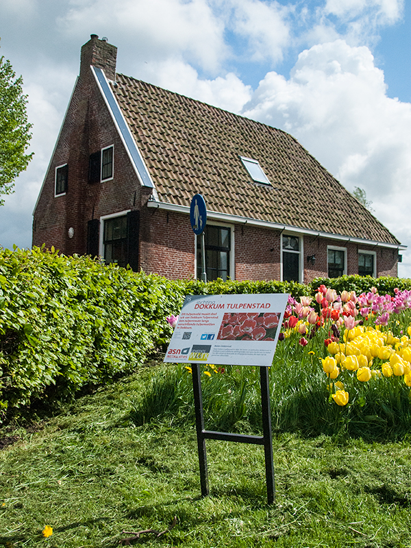 Tulpenstad Dokkum. Foto: Stichting Dokkum Tulpenstad