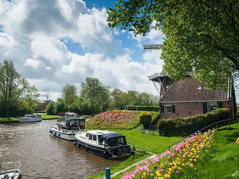 Tulpenroute Dokkum en omstreken. Info:: www.tulpenroutefriesland.nl