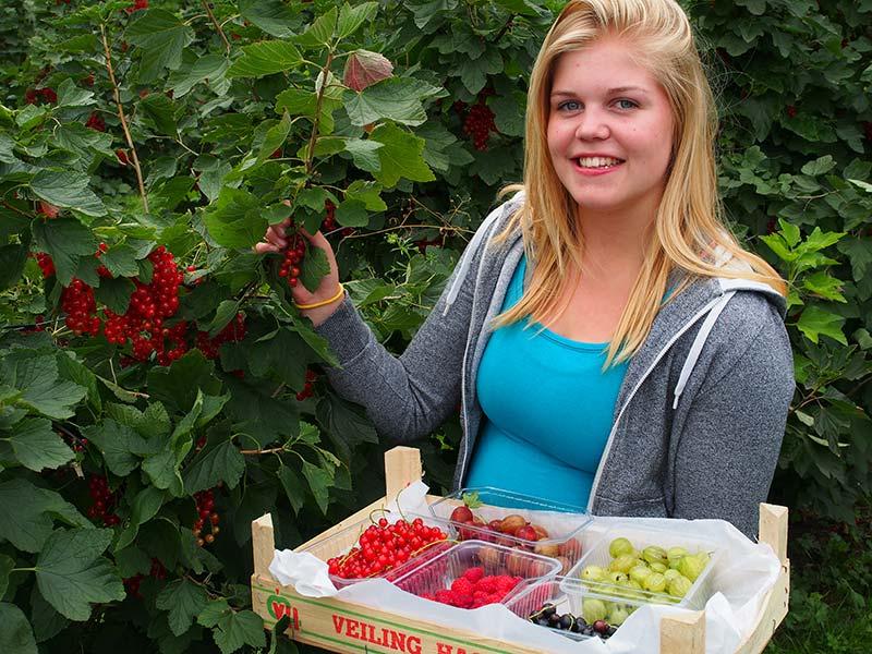 'De Fruittuin', een zelfpluk-fruittuin aan de Robyntsjewei in Eastermar. Info: www.defruittuin.nl